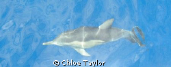 Dolphin from the surface :) by Chloe Taylor