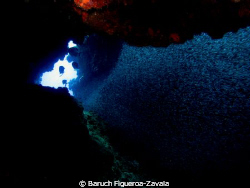 Silversides in a cave, Chinchorro Atoll by Baruch Figueroa-Zavala