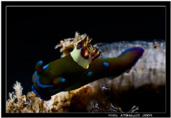 3D nudi     Canon 350D/Sigma 70mm by Yves Antoniazzo