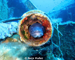 A picture of a conger that used to live a in tube from a ... by Borja Muñoz
