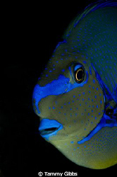 Blue fish face portrait taken in Tulamben, Bali. by Tammy Gibbs