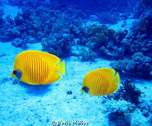 Beautifull contrast betwen the yellow  and the blue by Borja Muñoz