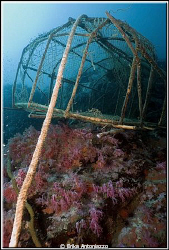 Why do they continue to put their fishing cages on the reef? by Erika Antoniazzo