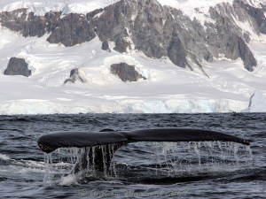 whales in the snow. Canon 450D by Andrew Macleod
