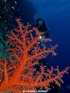 Colours of the Red Sea
