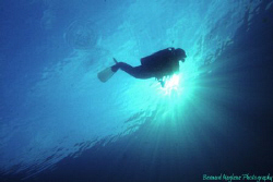 Early morning dive....... by Bernard Maglana