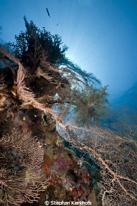 Beautiful Gorgonian at Jackfish Alley. by Stephan Kerkhofs