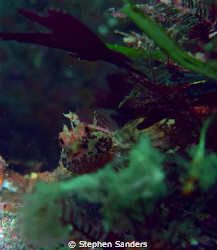 this is a sculpin taken at keystone. the camera that was ... by Stephen Sanders
