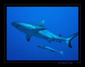 Sha'ab Rumi reef : Amazing dives in this magic place, mor... by Patrick Tutt