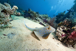 Scenery at Yolanda Reef. by Stephan Kerkhofs