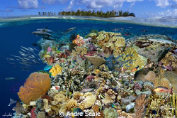 """Magic reef"" /  Digital composite portraying marine life ... by Andre Seale"