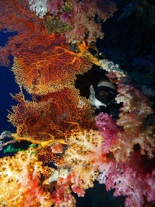Exploring the colors of soft corals. by Vladimir Levantovsky