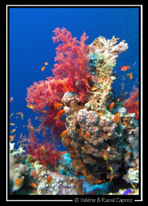 Picture taken in Dahab with a Canon G9. by Raoul Caprez