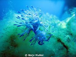 Little blue friend by Borja Muñoz