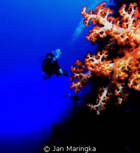 nice soft coral at bunaken, manado by Jan Maringka