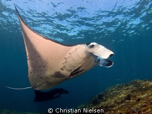 Manta's ballet. I love these magnificient animals. Olym... by Christian Nielsen