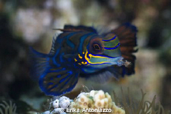 Eating mandarin fish. by Erika Antoniazzo