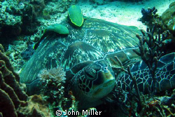 Resting turtle, taken on Canon S80. by John Miller