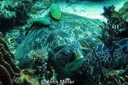 Resting turtle, taken on Canon S80. by John Miller