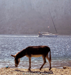 Donkeys by the sea.Before a dive