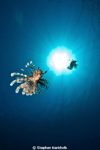 Lionfish taken in the blue! by Stephan Kerkhofs