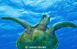 This green turtle we saw swimming in the distance so we s... by James Davies