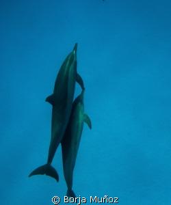 snorkeling with dolfins by Borja Muñoz