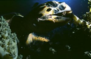 red sea- eilat aqatica 90 20mm lens . by Shmulik Blum