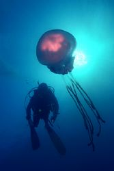 Medusa and diver, Alboran sea.
