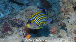 Shot this one in Palau with a Cannon 40D and Ikelite housing by Tony Anderson