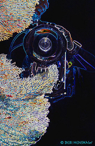 Through The Lens by Debi Henshaw