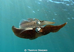 Happy Squid trio shot in the early afternoon on Buccoo Re... by Thomas Dinesen