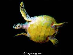 G10 by Jagwang Koo