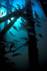 Shaft. Derewan. MMIII. Dusk dive to get the sun shining t... by John M Akar