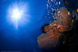 Seafan in the Similans by Soren Egeberg