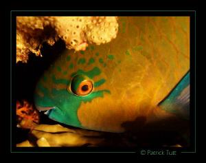 Night dive in Sudan - Lumix FX01 by Patrick Tutt