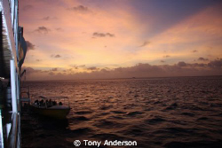 Good Morning by Tony Anderson