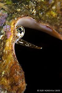 Eye of the Conch by Debi Henshaw