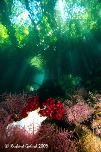 Raja Ampat-The passage-soft coral in late morning-Canon 5... by Richard Goluch