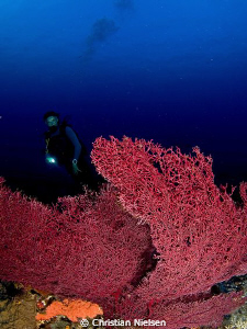 Nice Fan Coral and my wife as a model. Komodo has a grea... by Christian Nielsen