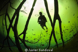 Diver in wonderland !!!!! ;-) by Javier Sandoval