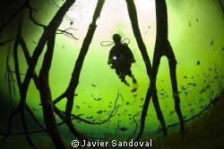 Diver in wonderland !!!!! ;-) by Javier Sandoval
