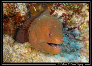 Nice smile ! by Raoul Caprez