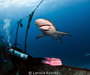 "Dee searching for a shark's tooth after the shark dive. ""... by Larissa Roorda"