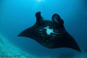 "Raja Ampat-Black Manta-""Darth Vader of The Ocean""-Canon 5... by Richard Goluch"