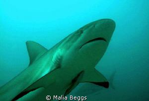 A beautiful creature that I enjoyed taking close photos o... by Malia Beggs