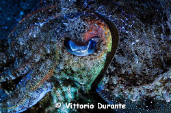 Cuttlefish eye by Vittorio Durante