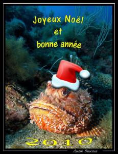 Le père Noël de la méditerranée by André Bruchez