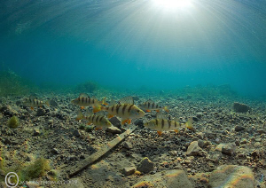 Sunlit Perch. D3 15mm - today, water now a balmy 7'C. by Mark Thomas