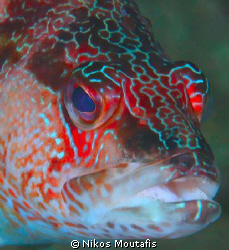 grouper by Nikos Moutafis